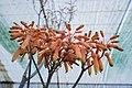 Greenhouses in qom عکس های گلخانه دنیای خار در روستای مبارک آباد قم 13.jpg