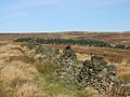Grouse on old wall near Derwent - geograph.org.uk - 288618.jpg