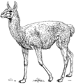 Guanaco (PSF).png