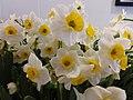 HK CWB Causeway Bay 1 Sunning Road Lee Gardens Three yellow n white flowers February 2019 SSG 04.jpg
