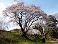 Hachigatajo-Edohigan.JPG