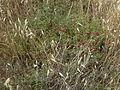 Hadassah Trail P1150403.JPG