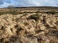 Halshanger Common - geograph.org.uk - 1228837.jpg