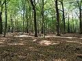 Hambach forest 68.jpg