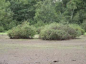 Hamburg, Naturschutzgebiet Eppendorfer Moor, im heißen Sommer 2018 ausgetrockneter Moorsee, WDPA ID 81615.jpg