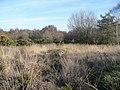 Hazeley Heath - geograph.org.uk - 1116995.jpg