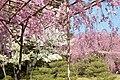 Heian Jingu Garden (3485234866).jpg