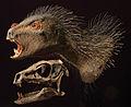 Heterodontosaurus model.jpg