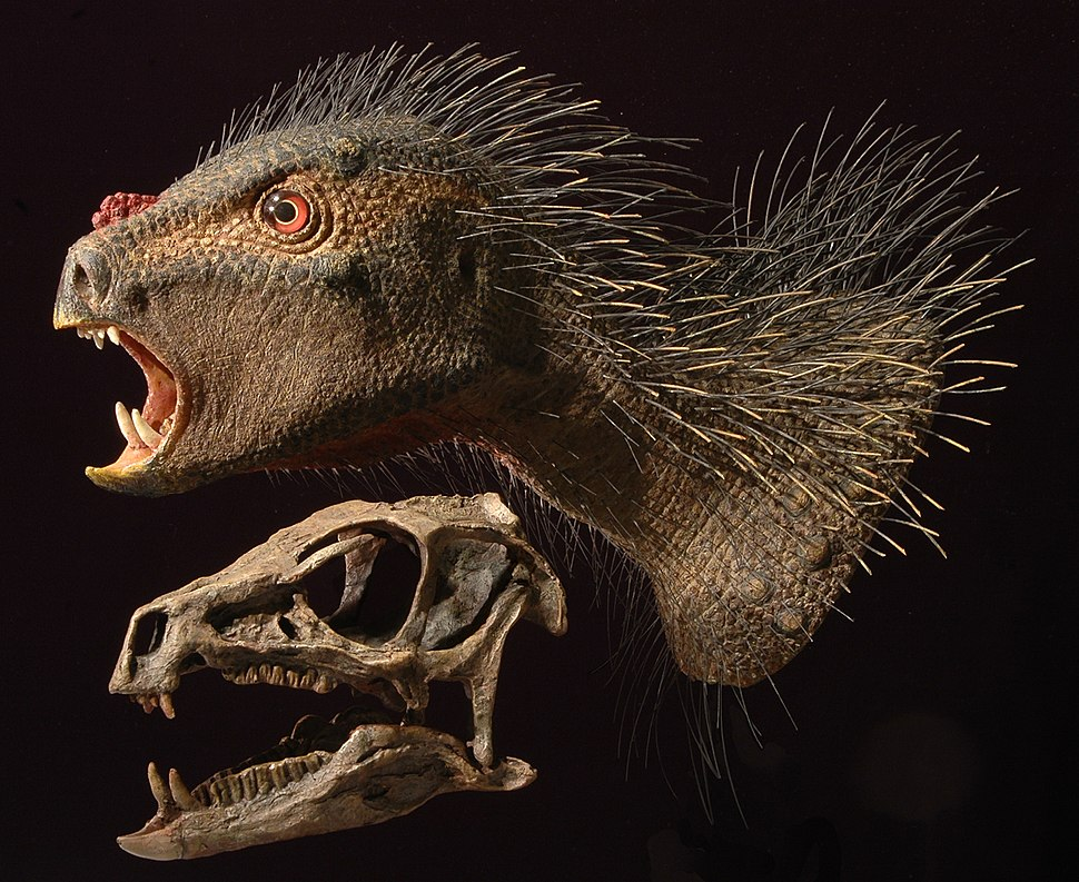 Heterodontosaurus model