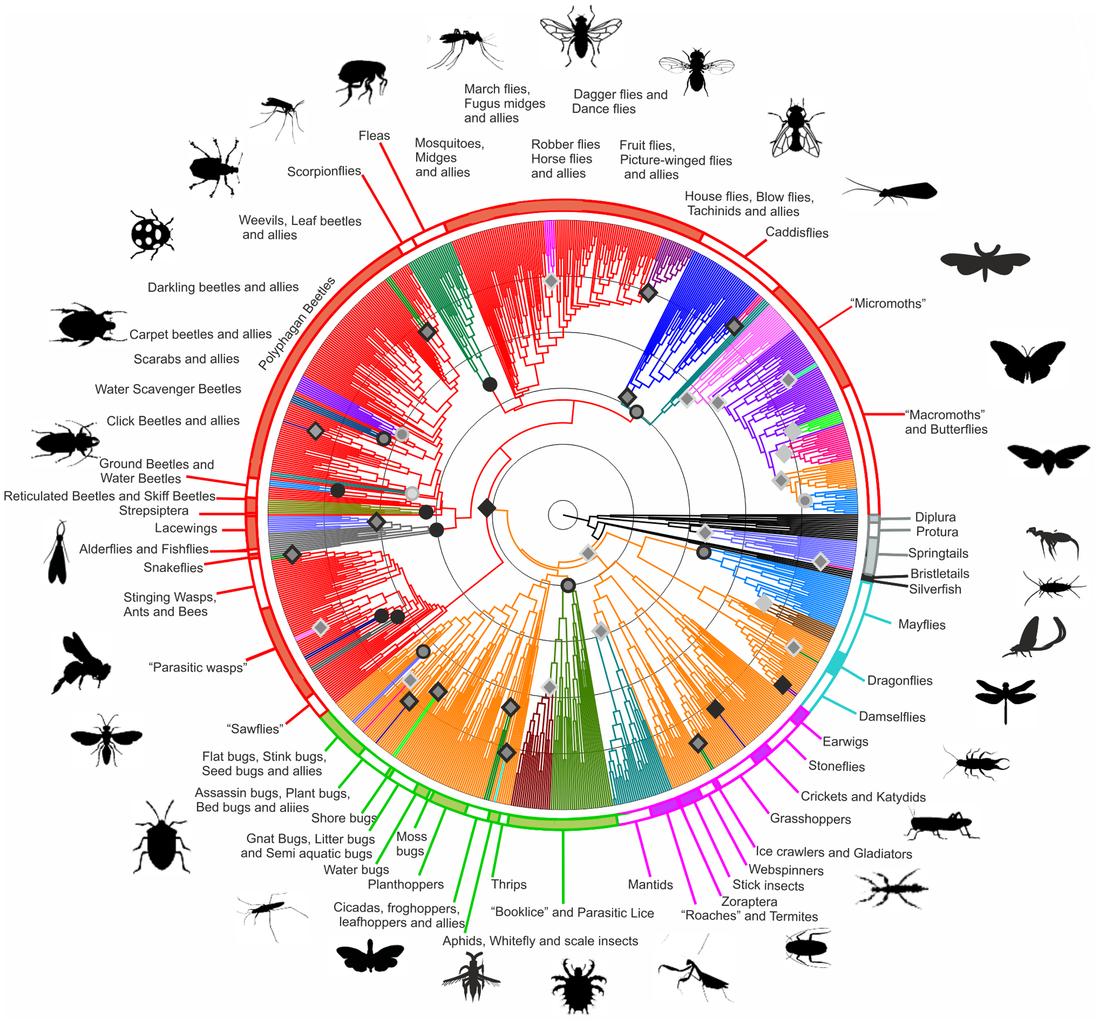 Phylogenetic Tree Ring