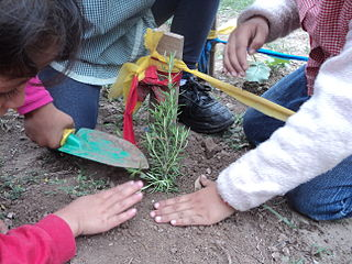 Garden-based learning