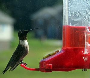 Bird feeder - A hummingbird feeder with red nectar