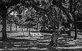 Hong Kong Park in Black and White.jpg