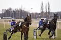 Horse Races 009 (8606929618).jpg