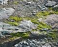 Horseshoe Island (46567637874).jpg