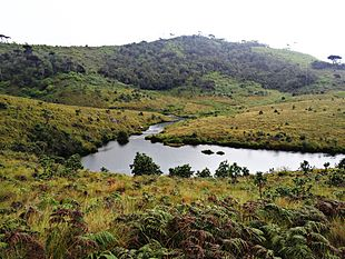 Image result for horton plains
