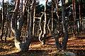 Hoveskogen2019 – (1).jpg
