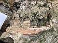 Hparpya-Cave-19.jpg