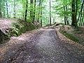 Hruboskalsko, cesta k Bukovině.jpg