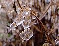 Ice Flower.jpg