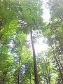 Im Wald nahe der Römerstraße - panoramio (3).jpg