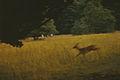 In Truskavets (1987). (15014575781).jpg