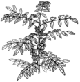 Indigo Plant (PSF).png