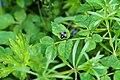 Insecte indéterminé -2.jpg