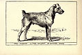 Irish Terrier BDL.jpg