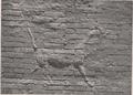 Ishtar gate sirrush.png