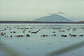 Izembek lagoon and Amak island.jpg