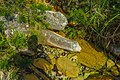 Jaboticatubas - State of Minas Gerais, Brazil - panoramio (79).jpg