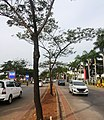Jalan di Pantai Indah Kapuk, Jakarta.jpg