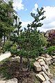Japanese garden @ Fort d'Issy-les-Moulineaux (34270987254).jpg