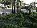 Jardín de la Plaza Hidalgo.jpg