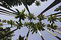 Jardim Botânico do Rio de Janeiro - 130715-6566-jikatu (9296977747).jpg