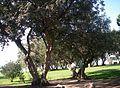 Jardim na envolvente da Torre de Belém.jpg