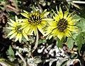 Jarrahdale Flower 10.jpg