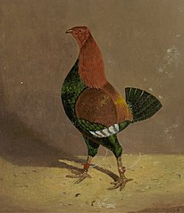 Fighting Cocks: a Dark-Breasted Fighting Cock, Facing Left