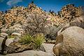 Joshua Tree National Park - California, USA.jpg