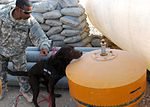 K-9 unit searches for IEDs DVIDS357324.jpg