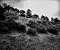 Kalemegdanski pejzaž.jpg