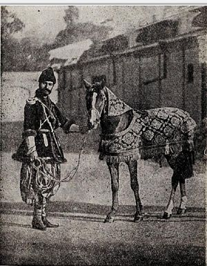 Karabakh horse - Karabakh horse, given as a gift to the Great Duchess Xenia Alexandrovna. May 1, 1892