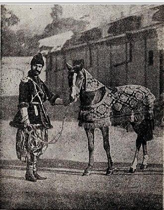 Karabakh horse - Karabakh horse, given as a gift to the Great Duchess Xenia Alexandrovna. May 1, 1892