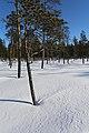 Kattajärvi Inari Suomi - Finland 2013-03 016.jpg