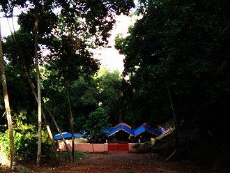 Kavu - A small sacred grove inside the Technopark, Trivandrum, India.