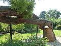 Kew Gardens Pagoda Tree P1170589.JPG