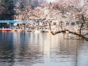 Kichijōji - Image: Kichijoji Blossom