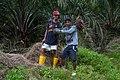 Kimanis Sabah Workers-in-Palm-Oil-Plantation-01.jpg