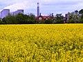 Kingston on Soar, fields and Ratcliffe on Soar power station - geograph.org.uk - 1293132.jpg